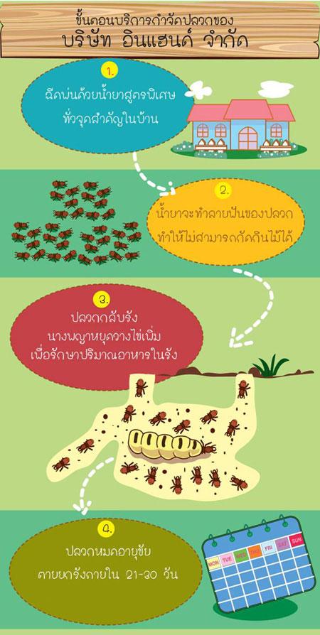 info-termite